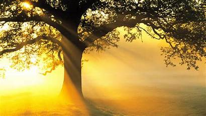 Tree Backgrounds Wallpapers Background Advertisement