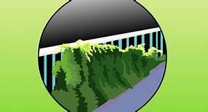 Come Piantare l'Edera Comune: 9 Passaggi (Illustrato)