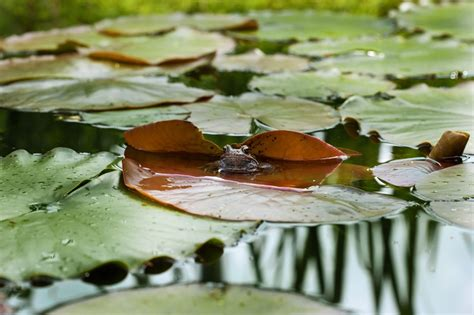 Wie Lege Ich Einen Teich An by Wie Lege Ich Einen Gartenteich An Kompetenzzentrum Iemb De