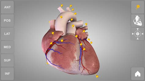 Heart 3d Anatomy Lite  Android Apps On Google Play