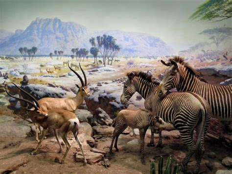 pin  rosco neko  american museum  natural history nyc