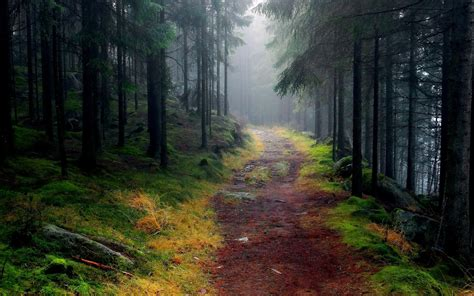 Hd Forest Wallpaper ·① Download Free High Resolution