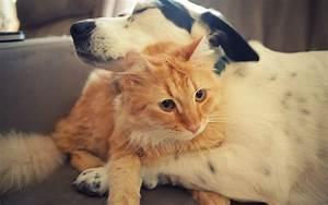 dog hugging cat hd wallpaper