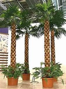 Goldfische Kaufen Berlin : k nstliche palmen kaufen pflanzen f r nassen boden ~ Lizthompson.info Haus und Dekorationen