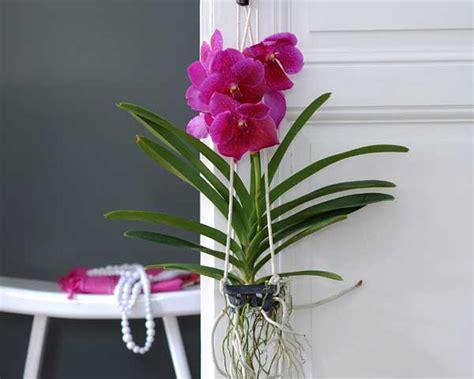 orchid 233 e en pot entretien l atelier des fleurs