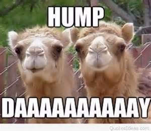 Happy Hump Day Funny Animals
