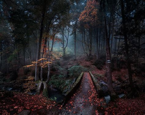 fall, leaves, Bulgaria, trees, nature, landscape, forest ...