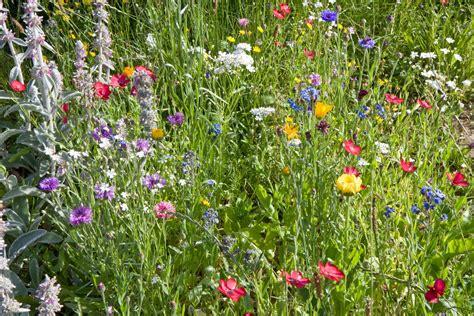 Wildblumen Im Garten wiesenblumen im garten foto bild pflanzen pilze