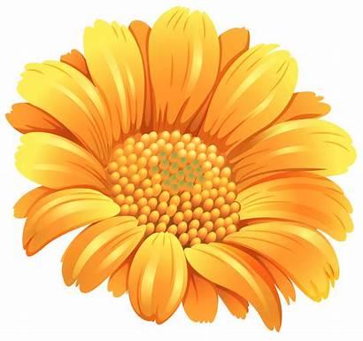 Orange Flower Clipart Flowers Yellow Transparent Clip