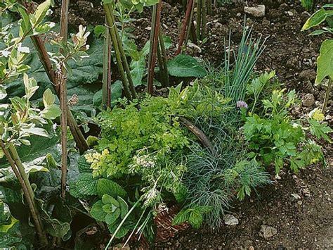 cuisine et terroir les plantes aromatiques à avoir au jardin