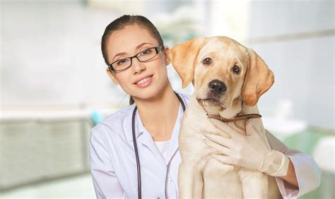 canby veterinary clinic veterinarian  canby  usa