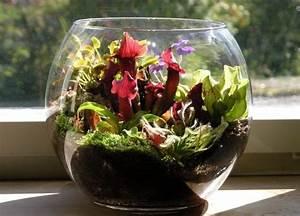 Fleischfressende Pflanzen Kaufen : gartenbau thomas carow spezialg rtnerei f r ~ Michelbontemps.com Haus und Dekorationen