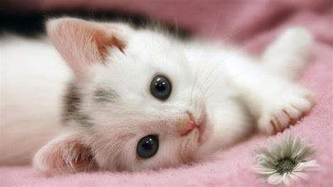 40 Yummy Yummy Pictures Of Cute Kittens  Tail And Fur