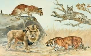 Taxonomic Representation Of The Felidae Family