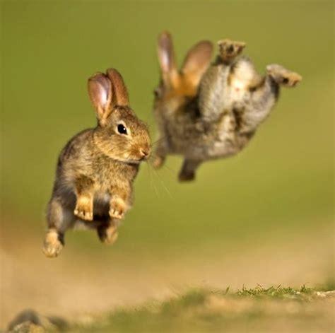 hopping bunny amazing hopping bunnies gölligt