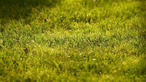 Warm And Soft Green Summer Grass Background, Lawn Stock