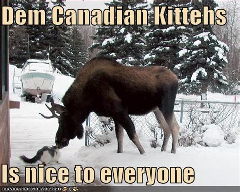 Canadian Moose Meme - speak of the devil true north strong and bonkers get away from that moose