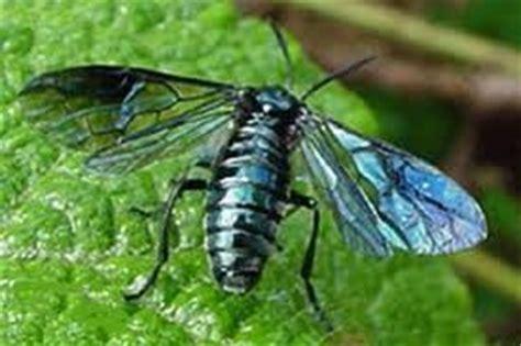 miellerie biodynamique de marla l abeille mafate ile de la r 233 union
