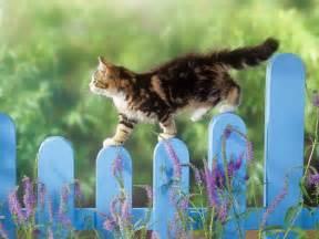 outdoor cat outdoor cat splendid wallpaper hd