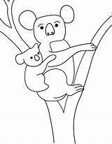 Coloring Koala Colouring Printable Cliparts Penguin Animal Bear Emperor Kolala Template sketch template