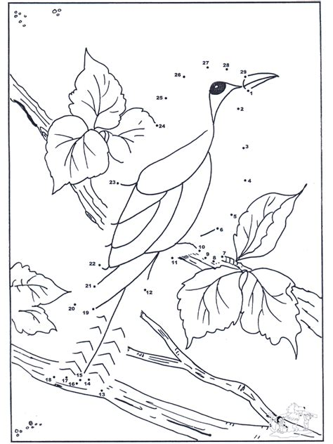 connect  dots bird  number picture