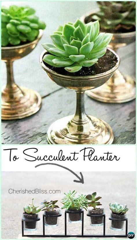 diy indoor outdoor succulent garden ideas projects