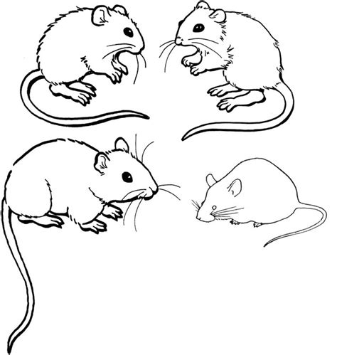 mice colouring pages  printable images