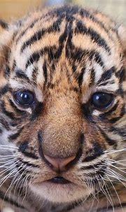 Jacksonville Zoo - ZooBorns
