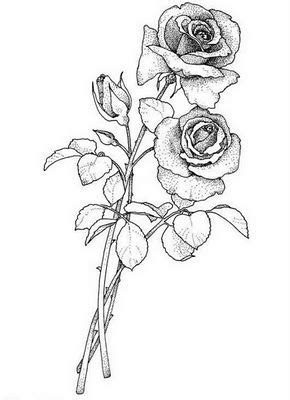 Pin by Suzy Pippard on Tattoo | Rose sketch, Floral drawing, Flowers