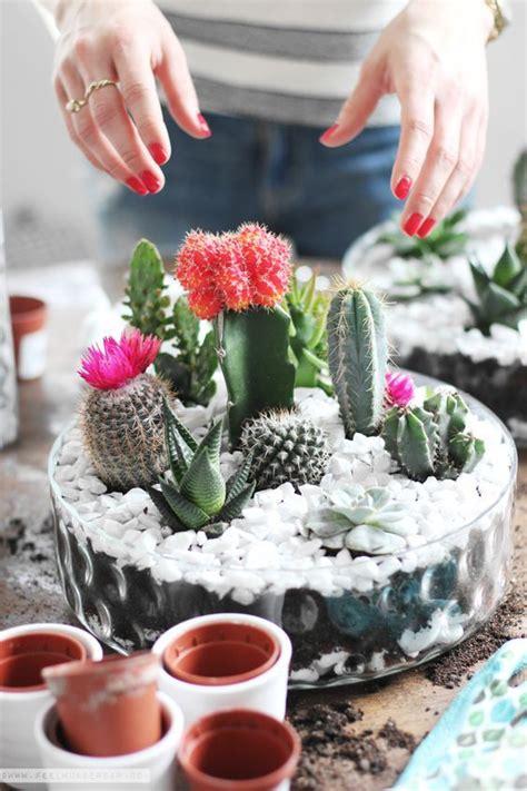 mini cactus gardens   leave  speechless