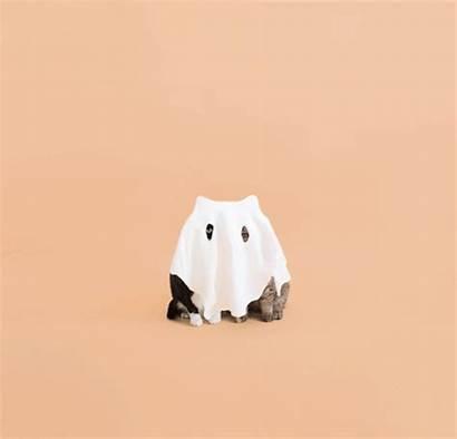 Cat Costume Halloween Neko Ghost Princess Cheeto