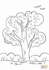 Coloring Summer Pages Tree Printable sketch template