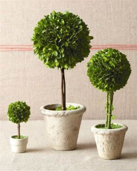 Be All Natural With Topiary Centerpieces! - B. Lovely Events