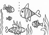 Coloring Fish Pages Aquarium Fishing Swimming Rod Drawing Printable Tank Water Aloha Five Butterfly Fishtank Cranberry Drawings Getcolorings Pole Hard sketch template