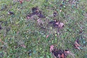Löcher Im Rasen : wildtiere in der stadt l cher im rasen garten ~ Lizthompson.info Haus und Dekorationen