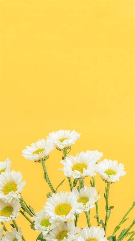 Aesthetic Yellow Flowers Wallpaper Iphone by Yellow Aesthetic Wallpapers Top Free Yellow Aesthetic