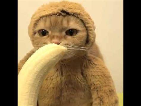 lustige affen bilder mit sprüchen katze isst banane im affen kost 252 m so s 252 223