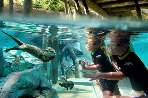 TripAdvisor Honors Discovery Cove as Number 1 Amusement Park in the World!   Central Florida Top 5