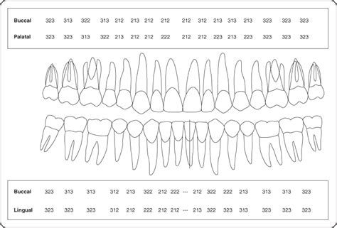 Periodontal Probing Chart Template