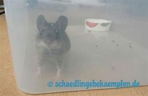 App Selber Bauen : rattenfalle selber bauen bdw app ~ A.2002-acura-tl-radio.info Haus und Dekorationen