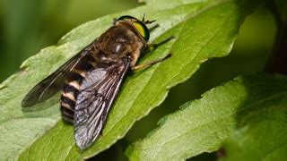 How To Keep Flies Away From Backyard by How To Keep Flies Away From Your Yard