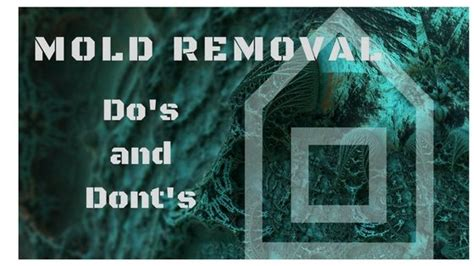 mold removal dos  donts utah flood cleanup