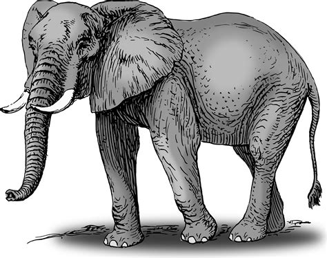 Elephant Clipart For Kids Free Clipart Images Concept Art Jobs Austin Body Knoxville Gallery Midland Tx Job Description Bachelor Of Arts Victoria University On Back Word In Open Office Line Vector