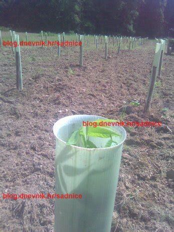 zaštita za voćke sadnice drveća nasad štitnici