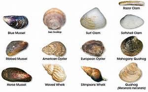 Shellfish Identification