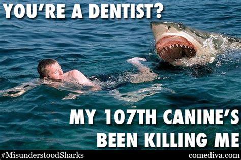 Shark Memes - the misunderstood shark meme comediva