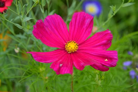 Fiore Flowers by Immagini Fiore Petalo Estate Colore Botanica