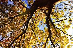 Bilder Herbst Kostenlos : herbst bilder kostenlose und lizenzfreie fotografien ~ Somuchworld.com Haus und Dekorationen