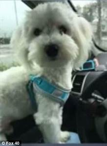 Dog is killed after he was thrown from car in California ...