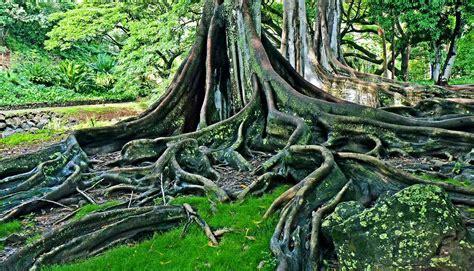 scientists   update darwins tree  life futurity